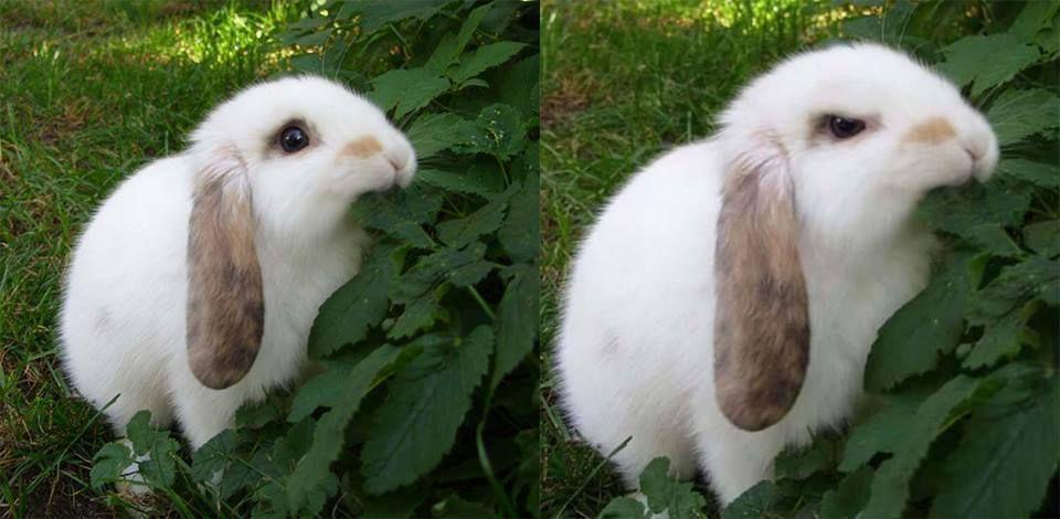 Bunny Boy Slut photos